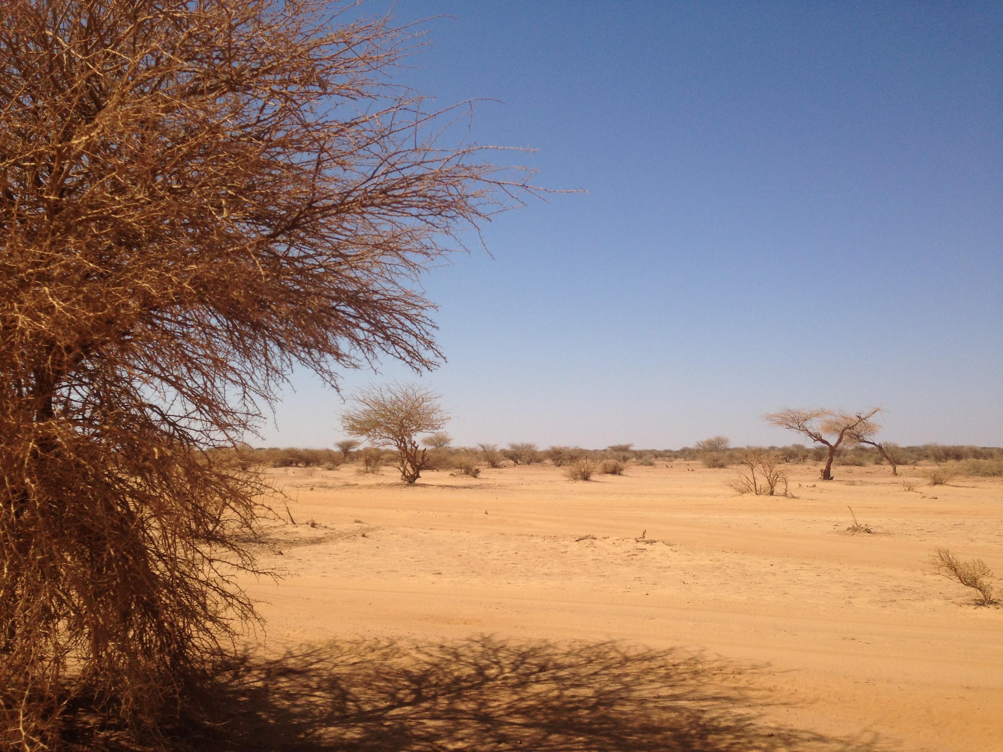 Preventing Violent Extremism Through Livelihood Innovations in Kenya and Somalia